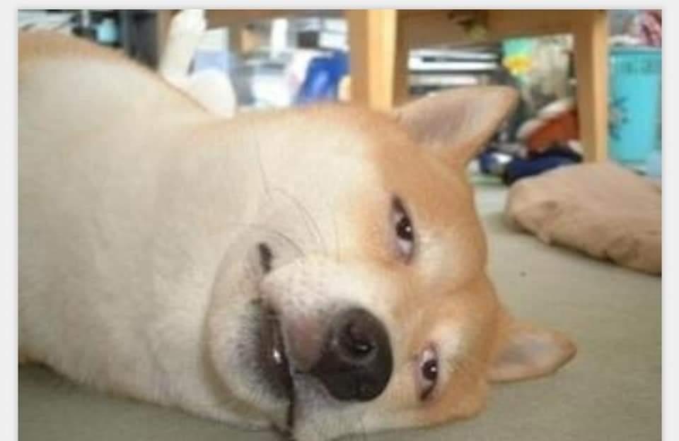 Hangovered Doggo -Doggo meme templates