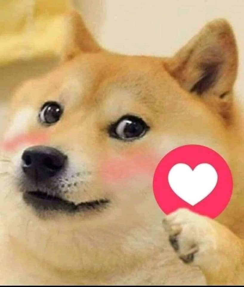 Doggo giving Heart Reaction-Doggo meme templates
