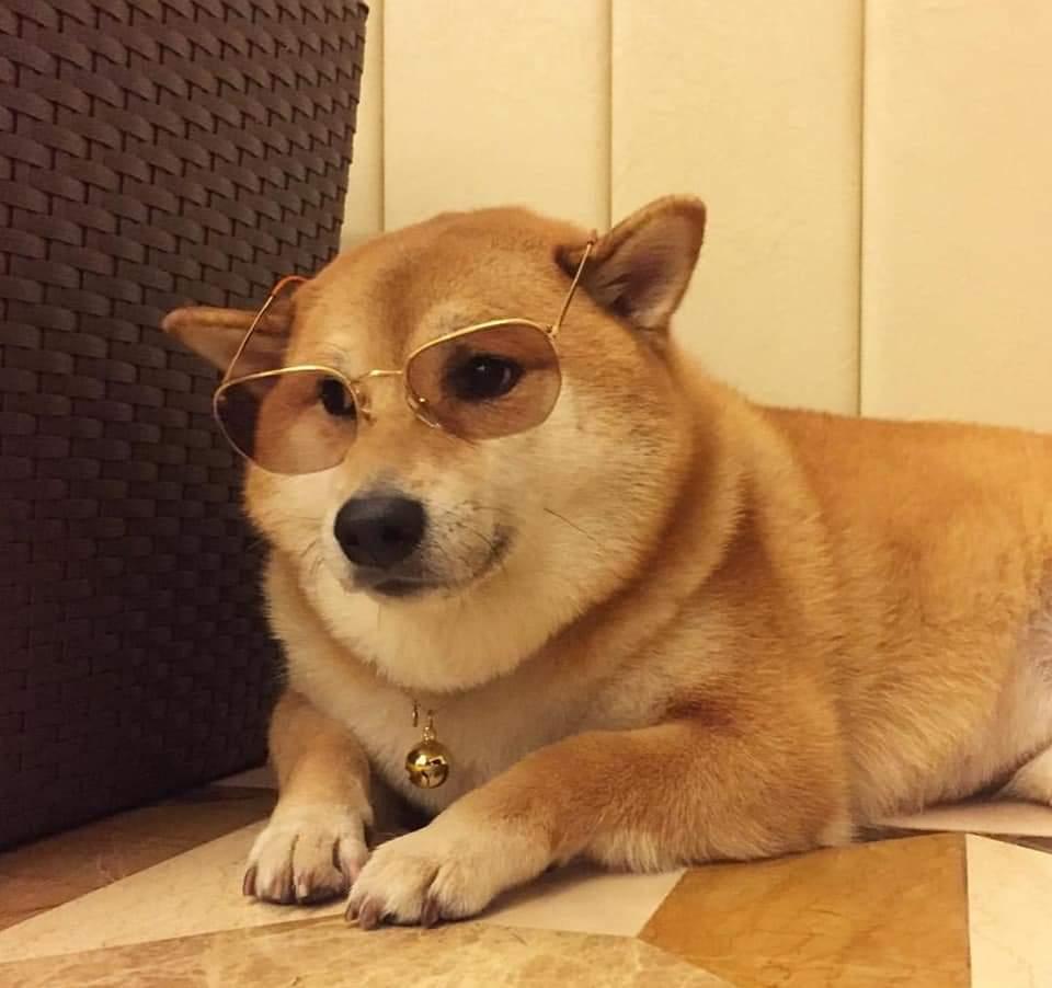 Doggo Meme Templates-Doggo meme templates